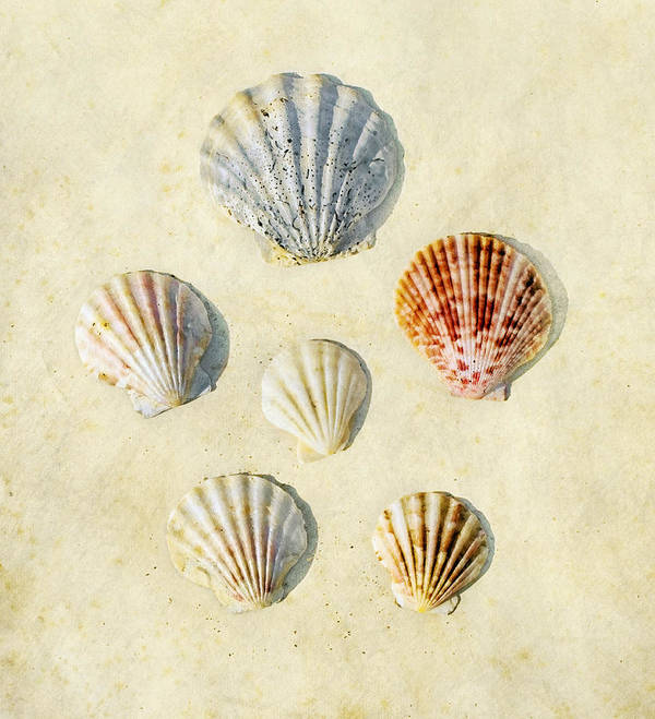 Six Poster featuring the photograph Sea Shells by Paul Grand