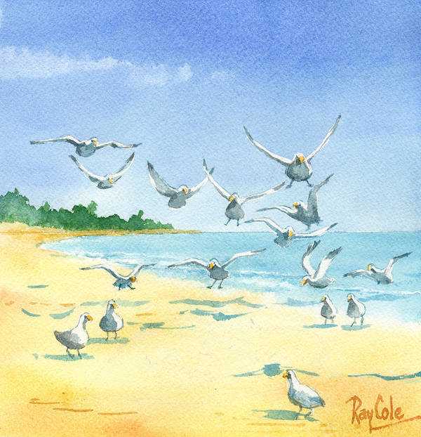 Seagulls Poster featuring the painting Seagulls by Ray Cole