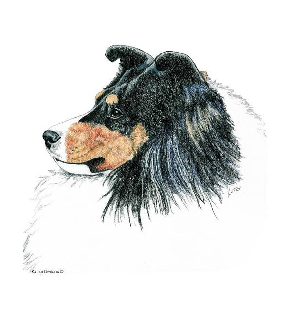 Sheltie Poster featuring the drawing Shetland Sheepdog, Sheltie Tri Color by Kathleen Sepulveda