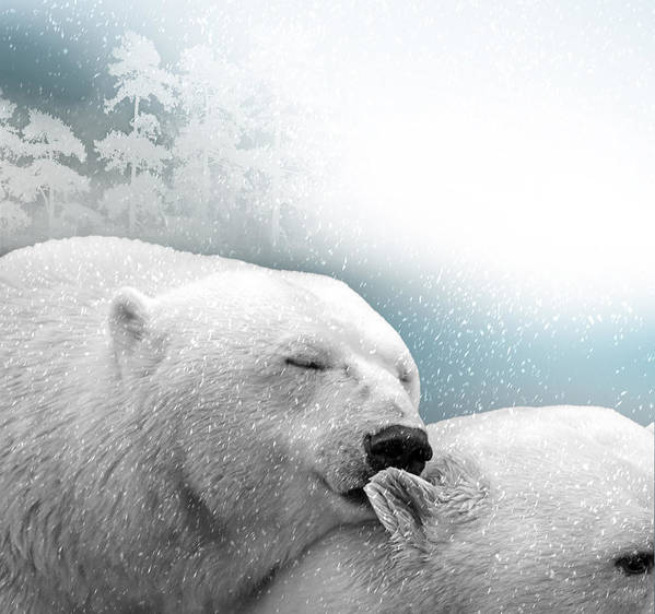 Bear Poster featuring the photograph Snowstorm Kiss by Ericamaxine Price