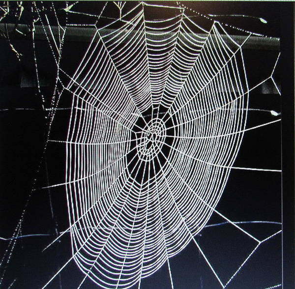 Spider's Web Poster featuring the photograph Spider's Web by Joyce Woodhouse