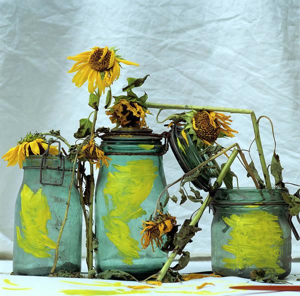 Yellow Poster featuring the photograph Sunflowers by Bernard Jaubert