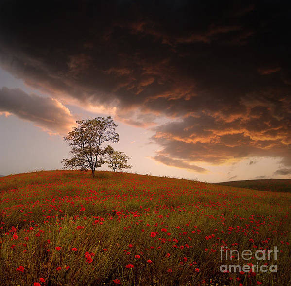 Landscape Sunset Poppies Bulgaria Clouds Poster featuring the photograph The Sunset Of The Poppies - 2 by Stoyanka Ivanova
