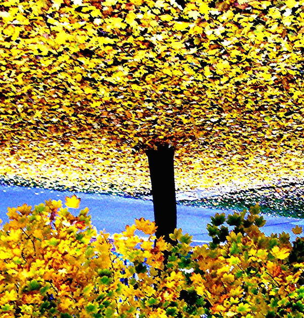 Tree Poster featuring the photograph The Yellow Ceiling by Richard Hubal