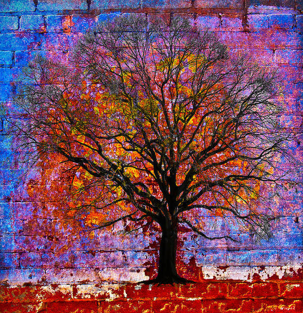 Tree Poster featuring the photograph Tree Of Life by David Clanton