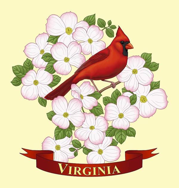 Virginia State Bird Cardinal And Flowering Dogwood Poster By Crista Forest