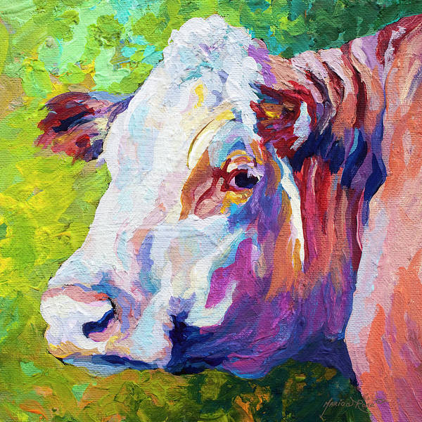 Cows Poster featuring the painting White Face Cow by Marion Rose
