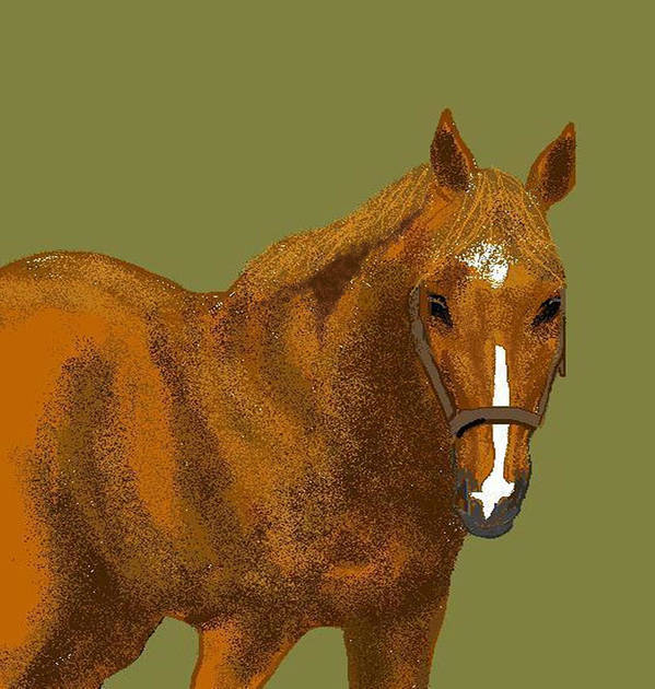 Horse Poster featuring the digital art Young Duke by Carole Boyd