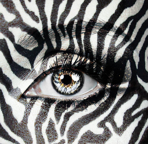 Eyes Poster featuring the photograph Zebra by Yosi Cupano