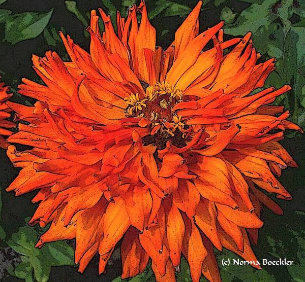 Flower Photography Poster featuring the painting Zinnia by Norma Boeckler