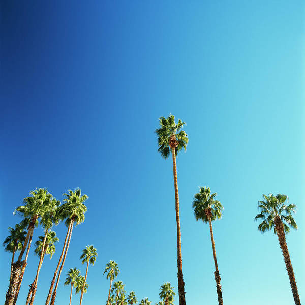 Clear Sky Poster featuring the photograph Palm Trees Against Blue Sky by Micha Pawlitzki