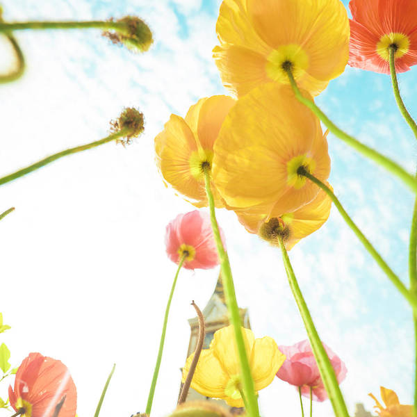 Scenics Poster featuring the photograph Flower In Sky by 4x-image