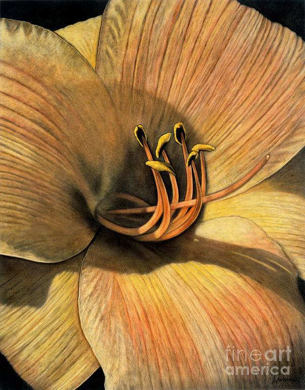 Lawrence Poster featuring the painting Day Lily by Lawrence Supino