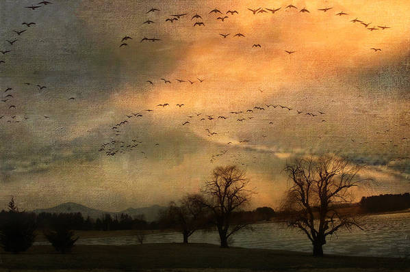 Birds Poster featuring the photograph And They Flew Away by Kathy Jennings
