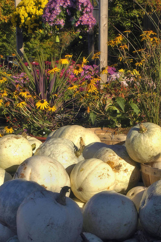 Harvest Poster featuring the photograph Autumn Gourds by Joann Vitali