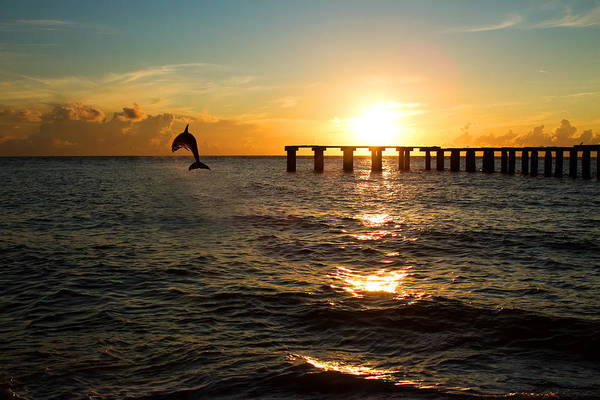 Background Poster featuring the photograph Dolphin Jumping Out Of The Sea In Florida by Fizzy Image
