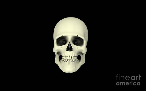 Horizontal Poster featuring the digital art Front View Of Human Skull by Stocktrek Images