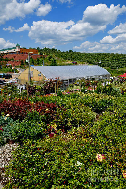 Allegheny County Poster featuring the photograph Shrubbery At A Greenhouse by Amy Cicconi