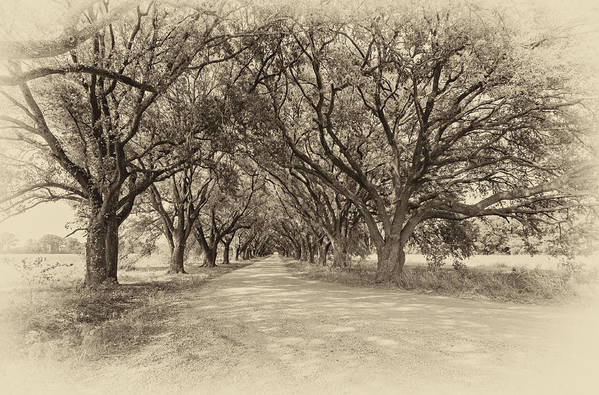 Oak Alley Poster featuring the photograph Southern Journey Sepia by Steve Harrington