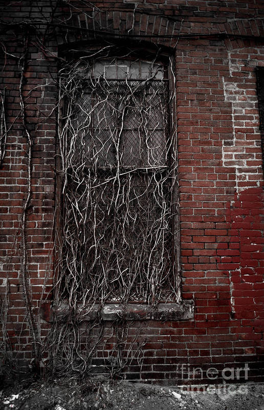 Abandoned Poster featuring the photograph Vines Of Decay by Amy Cicconi