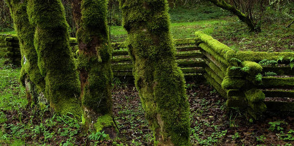 Moss Poster featuring the photograph Mossy Fence by Bob Christopher