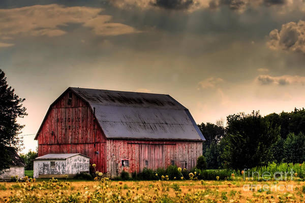 Barn Poster featuring the photograph Ontario Barn In The Sun by Tim Wilson