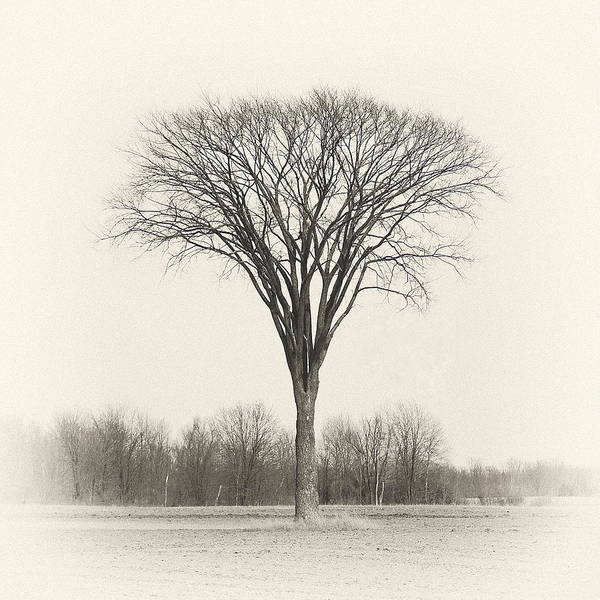 Ajnphotography Art Print featuring the photograph The Owl Tree by Alan Norsworthy