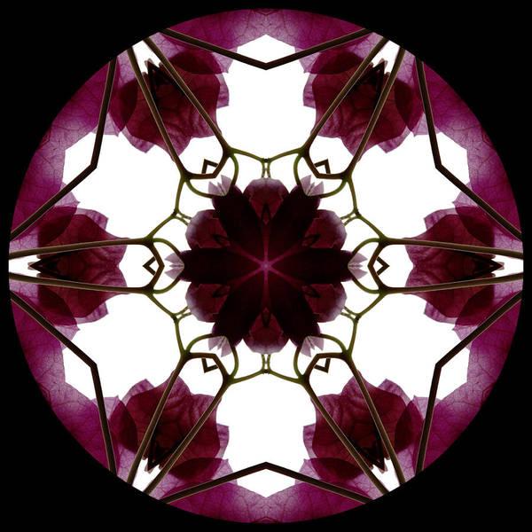 Mandala; Floral; Botanical; Scanner Photography; Scanography; Magenta; Bougainvillea; Leaves; Art Print featuring the photograph Bougainvillea Transparency 3 by Marsha Tudor