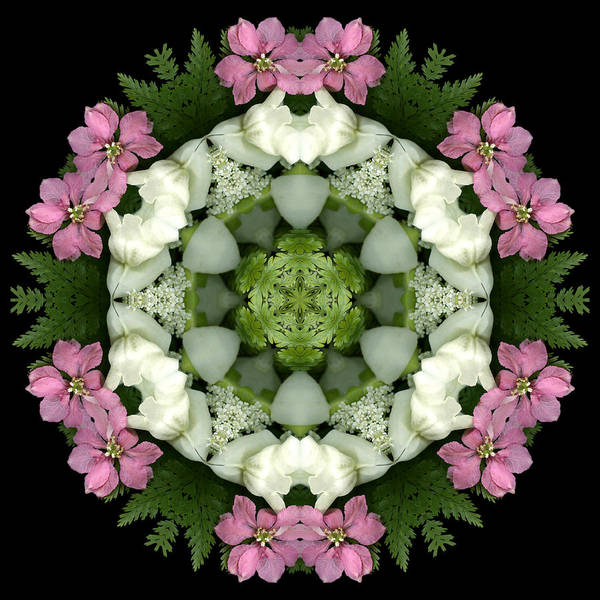 Mandala; Floral; Botanical; Scanner Photography; Scanography;snapdragons; Pink; White; Leaves; Art Print featuring the photograph Bridesmaid by Marsha Tudor
