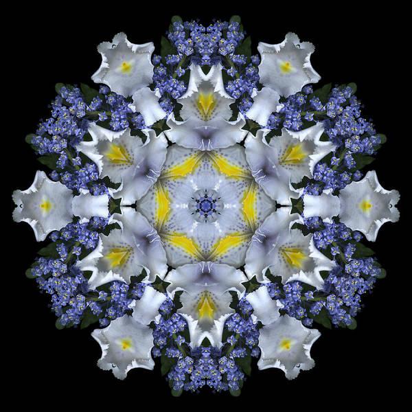 Mandala; Floral; Botanical; Scanner Photography; Scanography;ceanothus; Blue; White; Green; Leaves; Art Print featuring the photograph Ceanothus Iris Medley 1 by Marsha Tudor