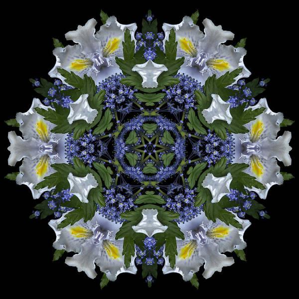 Mandala; Floral; Botanical; Scanner Photography; Scanography;ceanothus; Blue; White; Green; Leaves; Art Print featuring the photograph Ceanothus Iris Medley 2 by Marsha Tudor