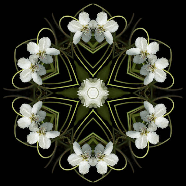 Mandala; Floral; Botanical; Scanner Photography; Scanography; Pear Blossoms; White; Leaves; Art Print featuring the photograph Hearts And Flowers by Marsha Tudor