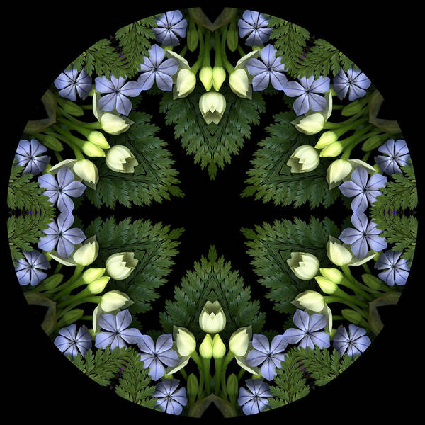 Mandala; Floral; Botanical; Scanner Photography; Scanography; Narcissus Art Print featuring the photograph Narcissus Group 1 by Marsha Tudor