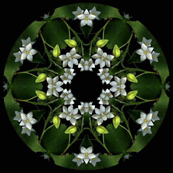 Mandala; Floral; Botanical; Scanner Photography; Scanography; Abutilon; White; Yellow; Leaves; Art Print featuring the photograph Ojai Abutilon by Marsha Tudor