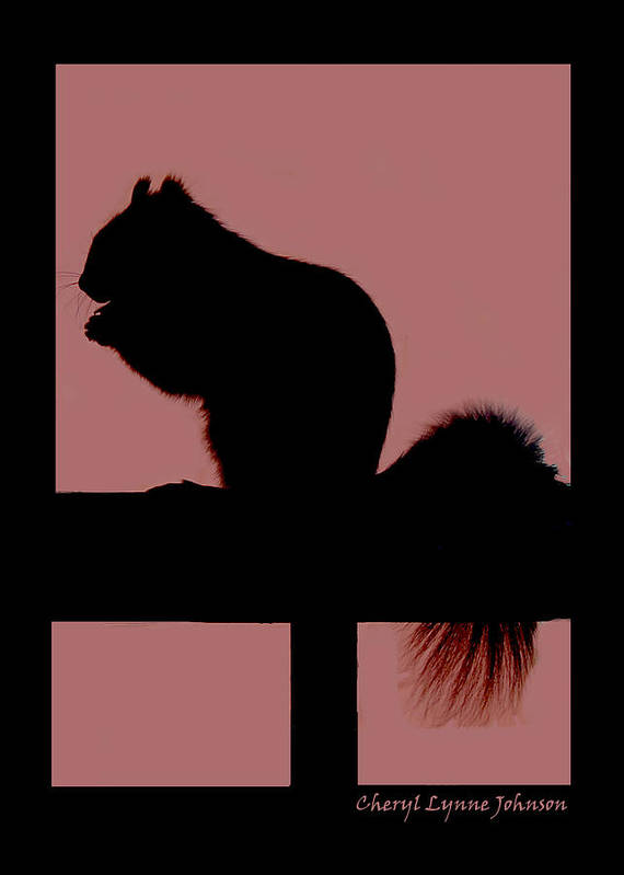 Silouette Of Squirrel Art Print featuring the photograph Squirrel Silouette by Cheryl Lynne Leech-Johnson