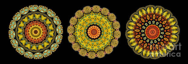 Ernst Haeckel Art Print featuring the photograph Kaleidoscope Ernst Haeckl Sea Life Series Triptych by Amy Cicconi