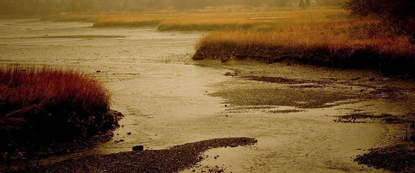 Sepia Art Print featuring the photograph Wetland Stream by Jack Foley