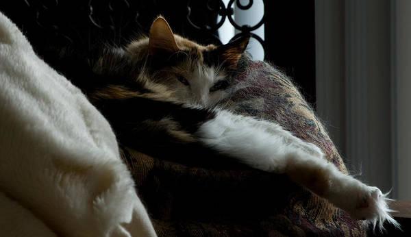 Cat Art Print featuring the photograph Cat Nap by Michael Walnum