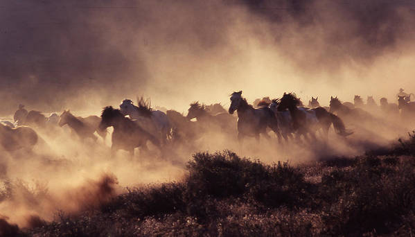Horses Art Print featuring the photograph Stampede by Francine Gourguechon