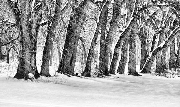 The Noreaster Art Print featuring the photograph The Noreaster Bw by JC Findley