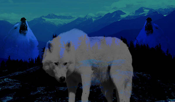 Wolves Art Print featuring the photograph White Wolves by Evelyn Patrick