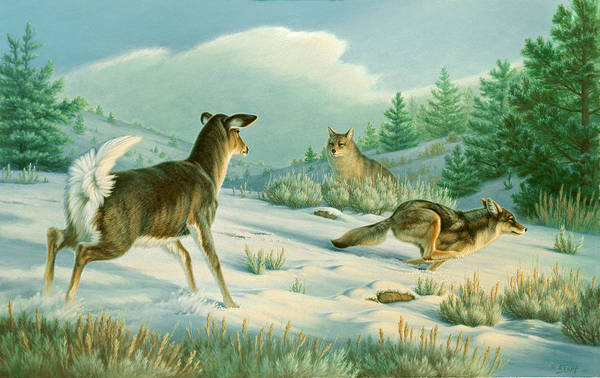 Wildlife Art Print featuring the painting Stand-off -whitetail Doe And Coyotes by Paul Krapf