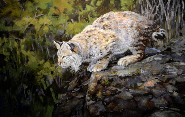 Bobcat Art Print featuring the pastel Bobcat by Mary Ann Cherry
