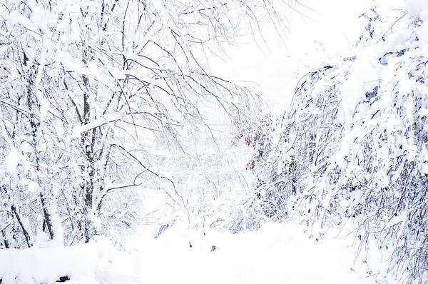Snow Art Print featuring the photograph Hurricane Sandy Snow by Thomas R Fletcher