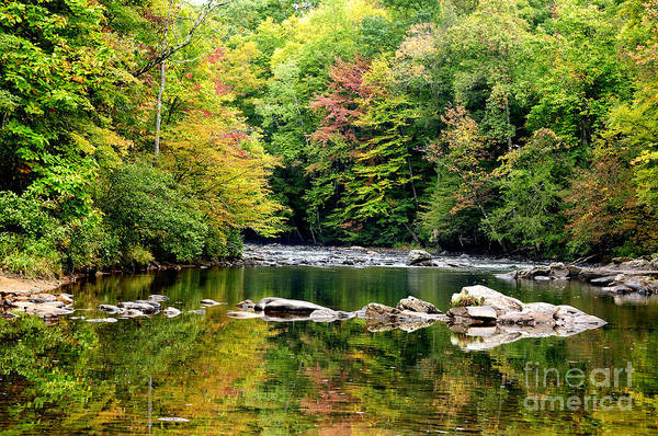 Williams River Art Print featuring the photograph Fall Along Williams River by Thomas R Fletcher