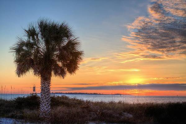 Pensacola Nas Art Print featuring the photograph A Single Palm by JC Findley