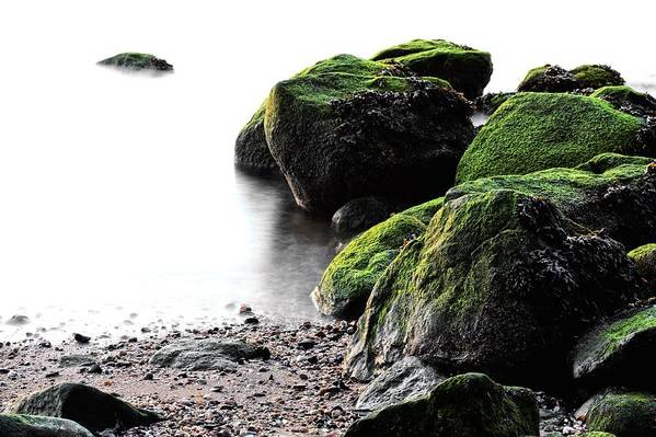 Stepping Stones Park Art Print featuring the photograph A Study In Green by JC Findley