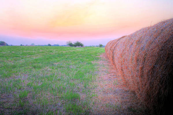 Kansas Art Print featuring the photograph Hay There by JC Findley