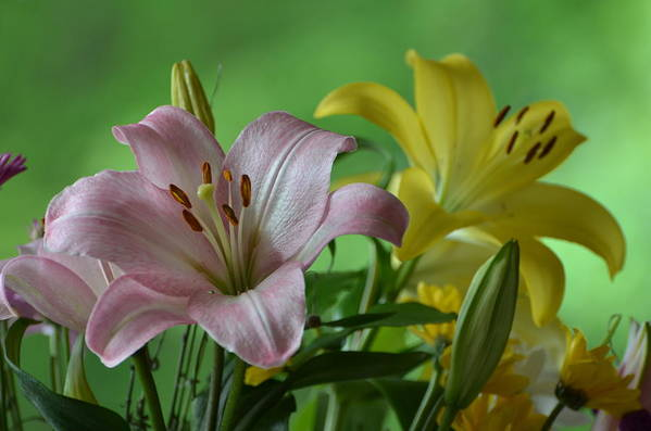 Flowers Art Print featuring the photograph Pink Lilly by Raju Alagawadi
