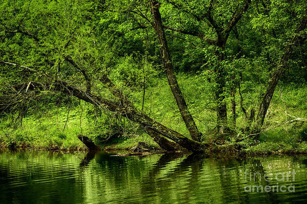 Spring Print featuring the photograph Spring Along West Fork River by Thomas R Fletcher